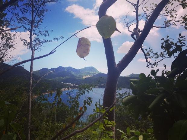 Grande Anse aux Anses d'Arlet Martinique