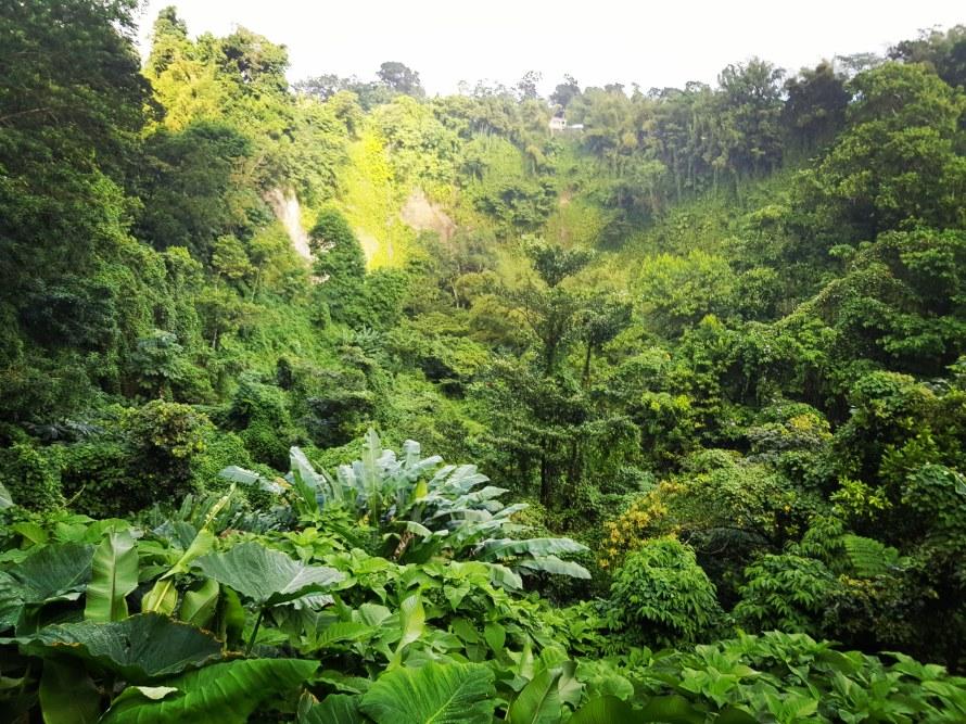 Ajoupa Bouillon Cascade Dany Martinique