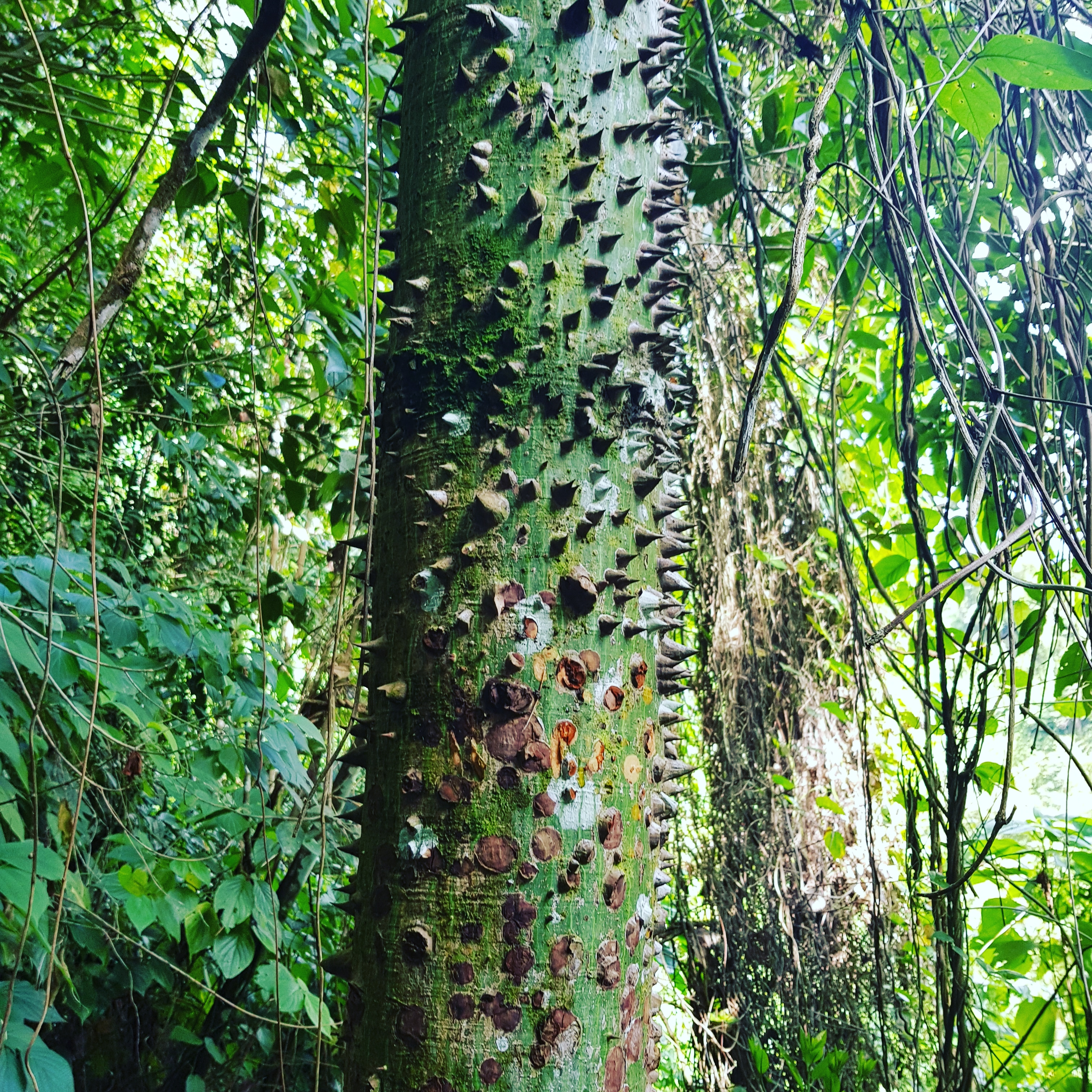 Fromager randonnée cascade Dany Martinique