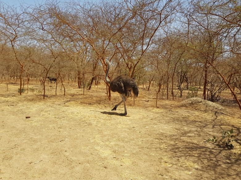Une semaine au Sénégal Réserve de Bandia